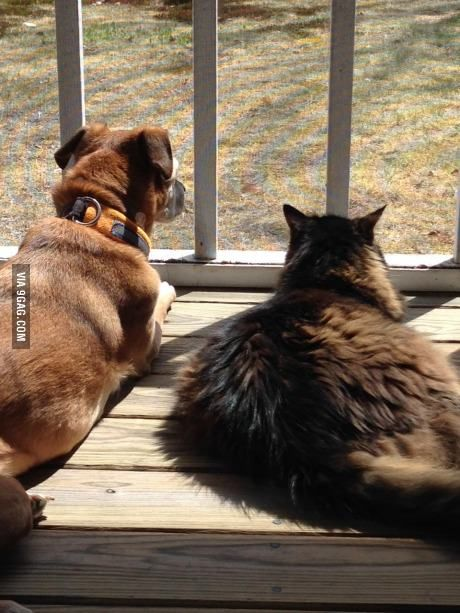 My Average Sized Dog And Oversized Cat Enjoying The Porch On The First Nice Day Of Spring Dogs Cute Animals Cute Cats