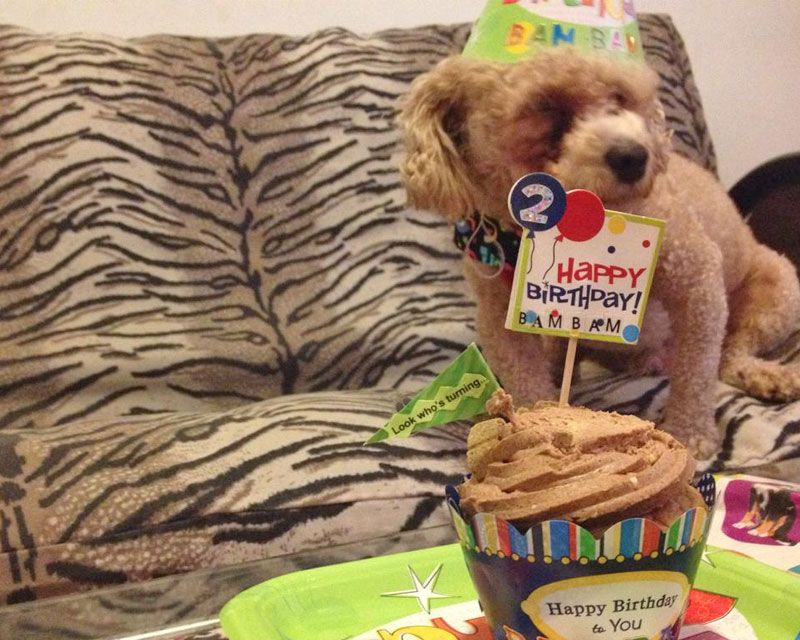 Canine Cupcakes Is The One Stop Shop To Buy Dog Birthday Cupcake