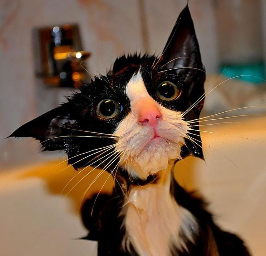 22 Hilarious Pictures Of Wet Cats Funny Cat Pictures Cat Pics