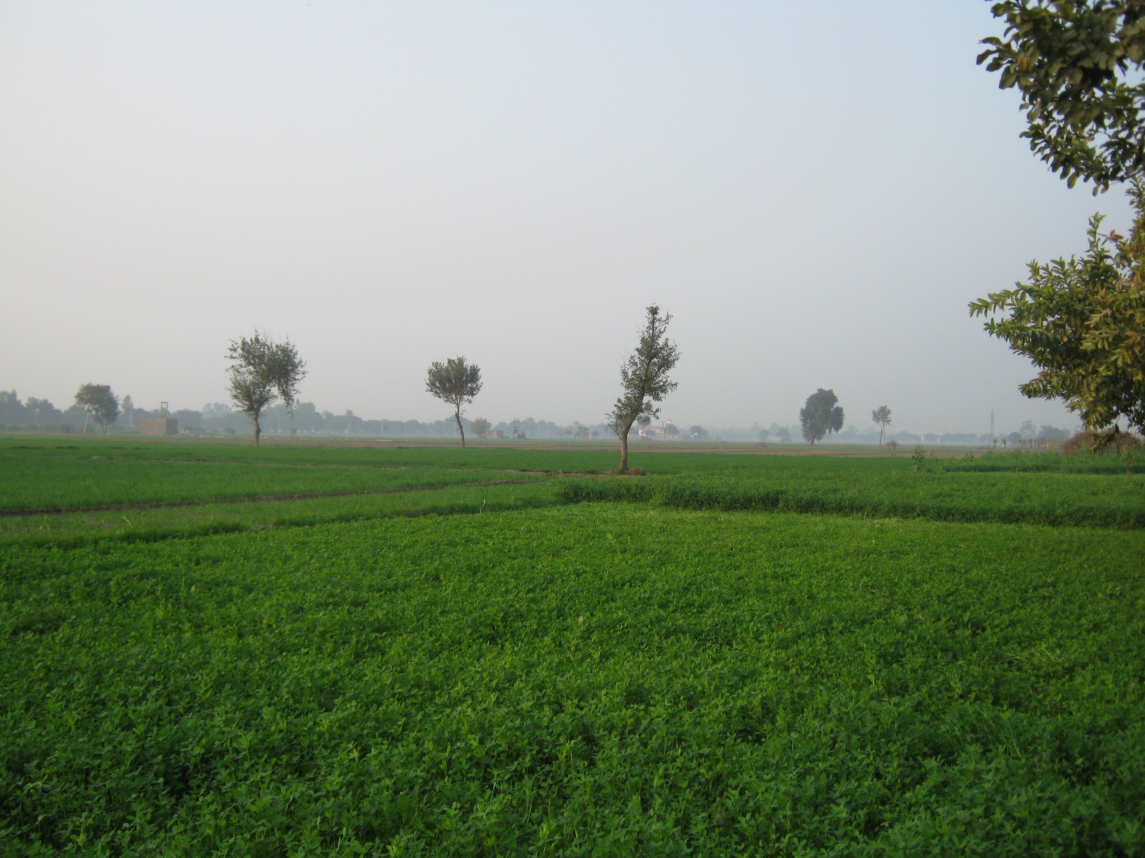 Agricultural Lands For Sale in Tandur Surroundings