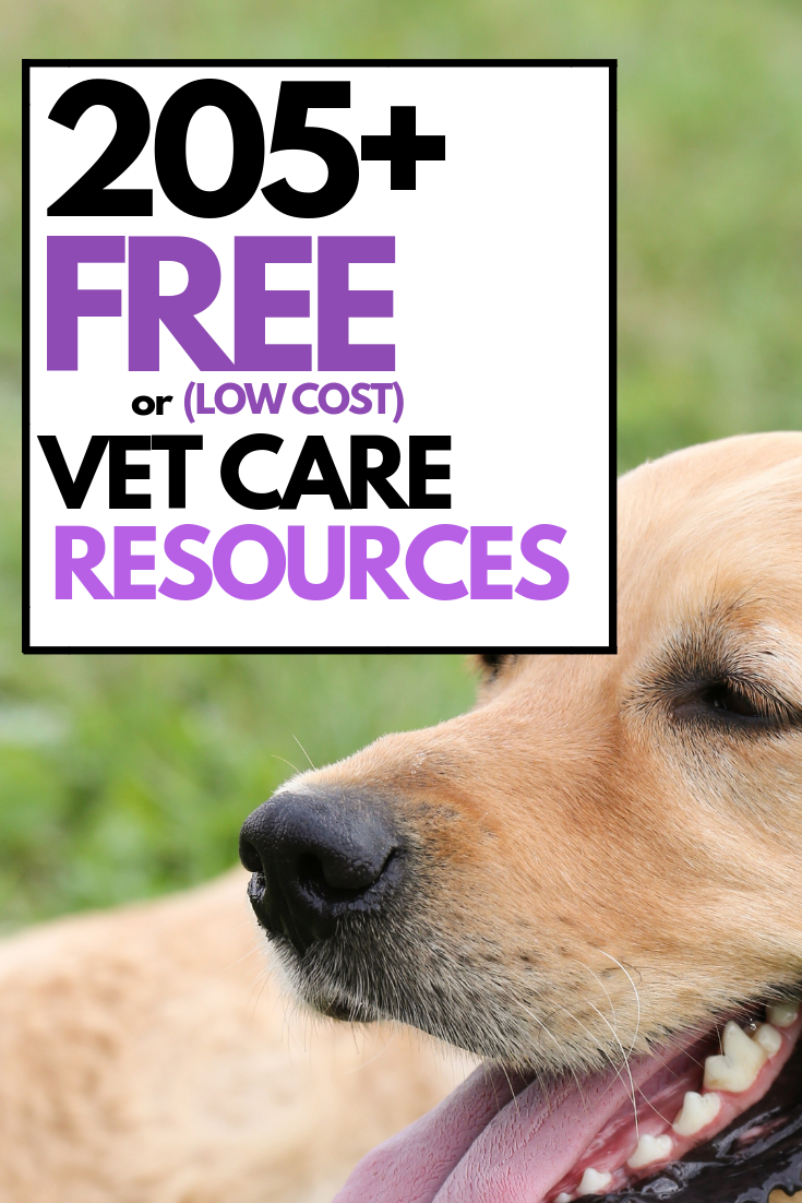 205+ Resources for Free or Low Cost Veterinary Care