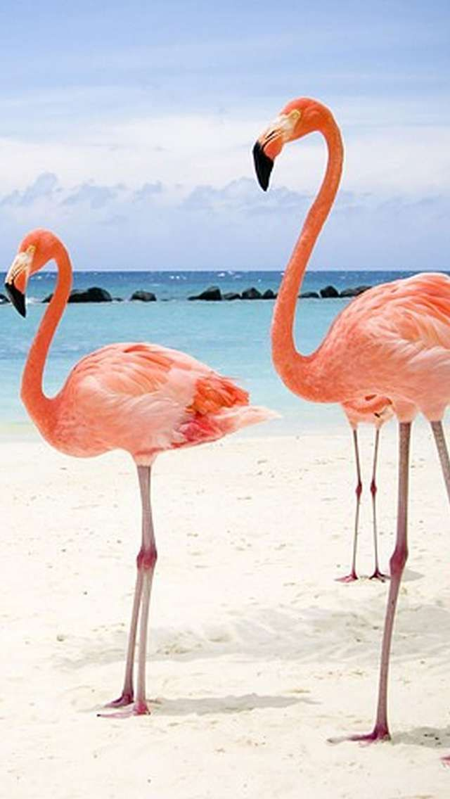 flamingo costume pattern Best iPhone Wallpapers, iPhone
