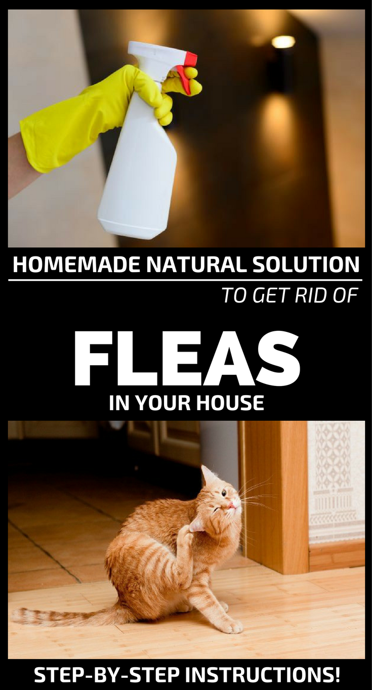 Flea Infestation Is A Homeowner S Worst Nightmare If The Infestation Is Not Contained During The Initial S Home Remedies For Fleas Flea In House Flea Remedies