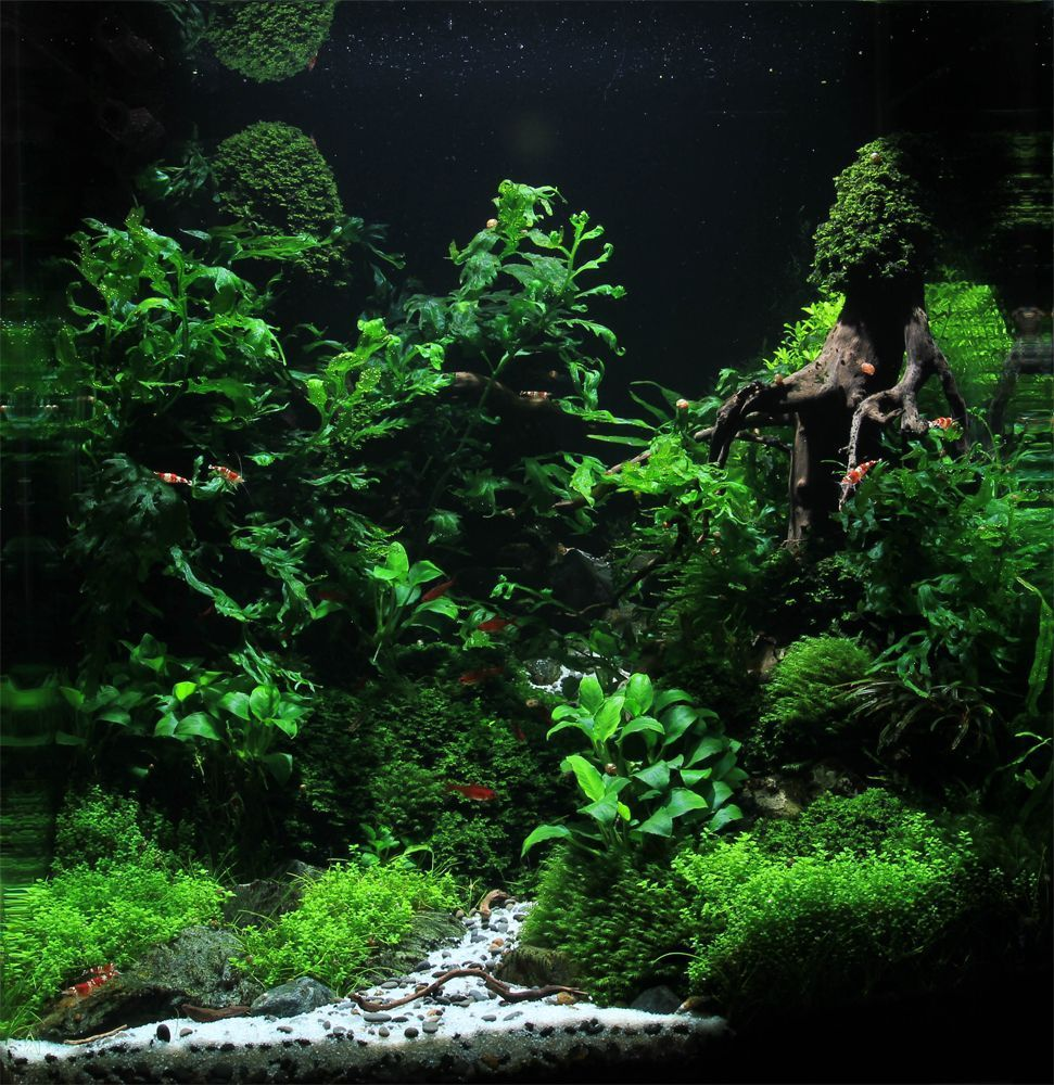 Stunning Aquascape Design Ideas 27 | Tank Scapes ...