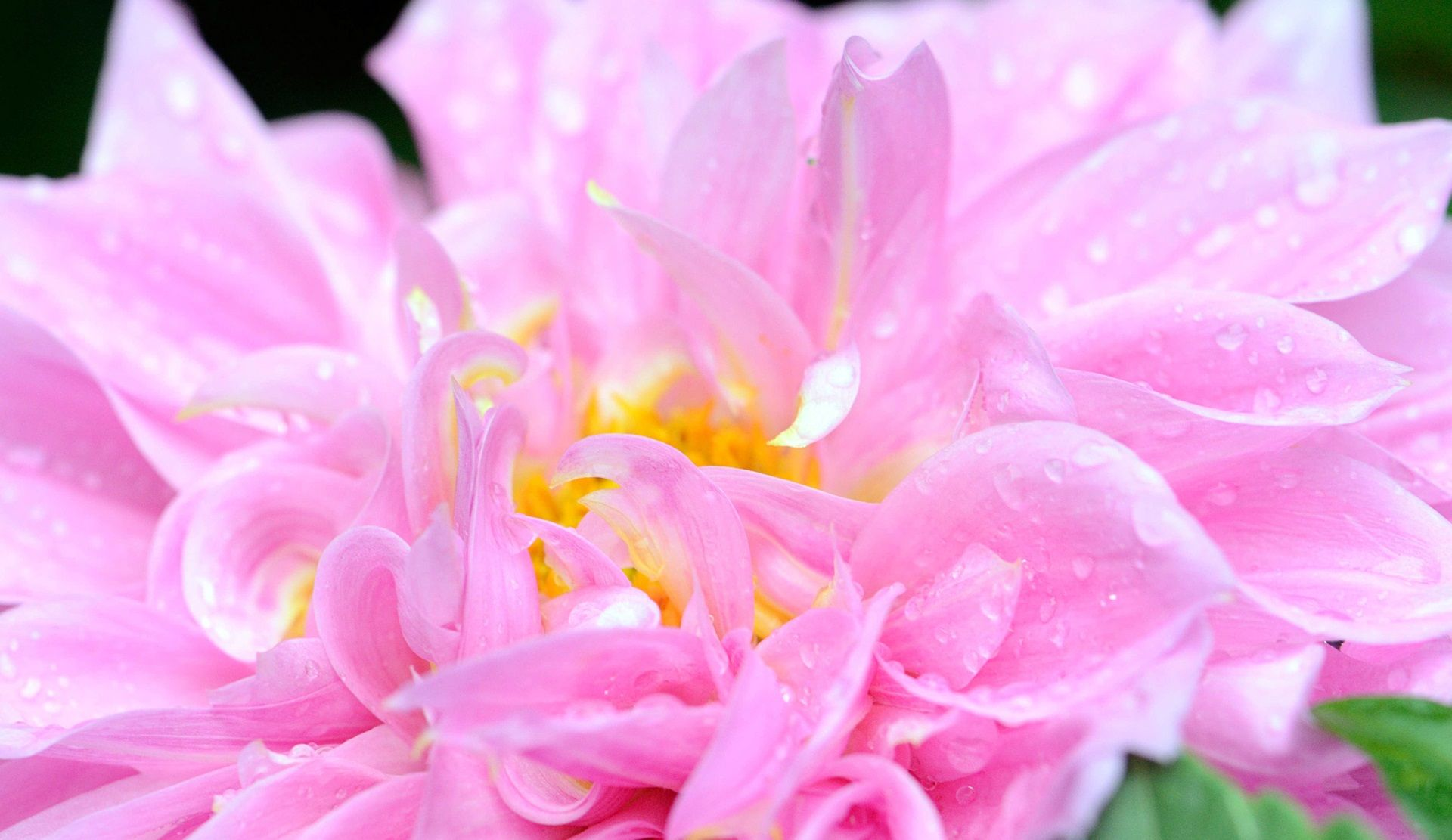 15 Amazing Beautiful Flowers Photos For Free Download Get Free