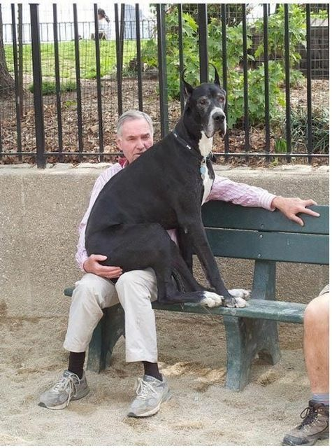 What do you mean I am not a lap dog