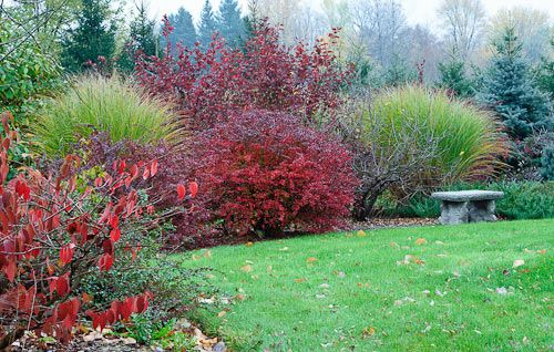 In our shrub border red foliage from left to right Marie