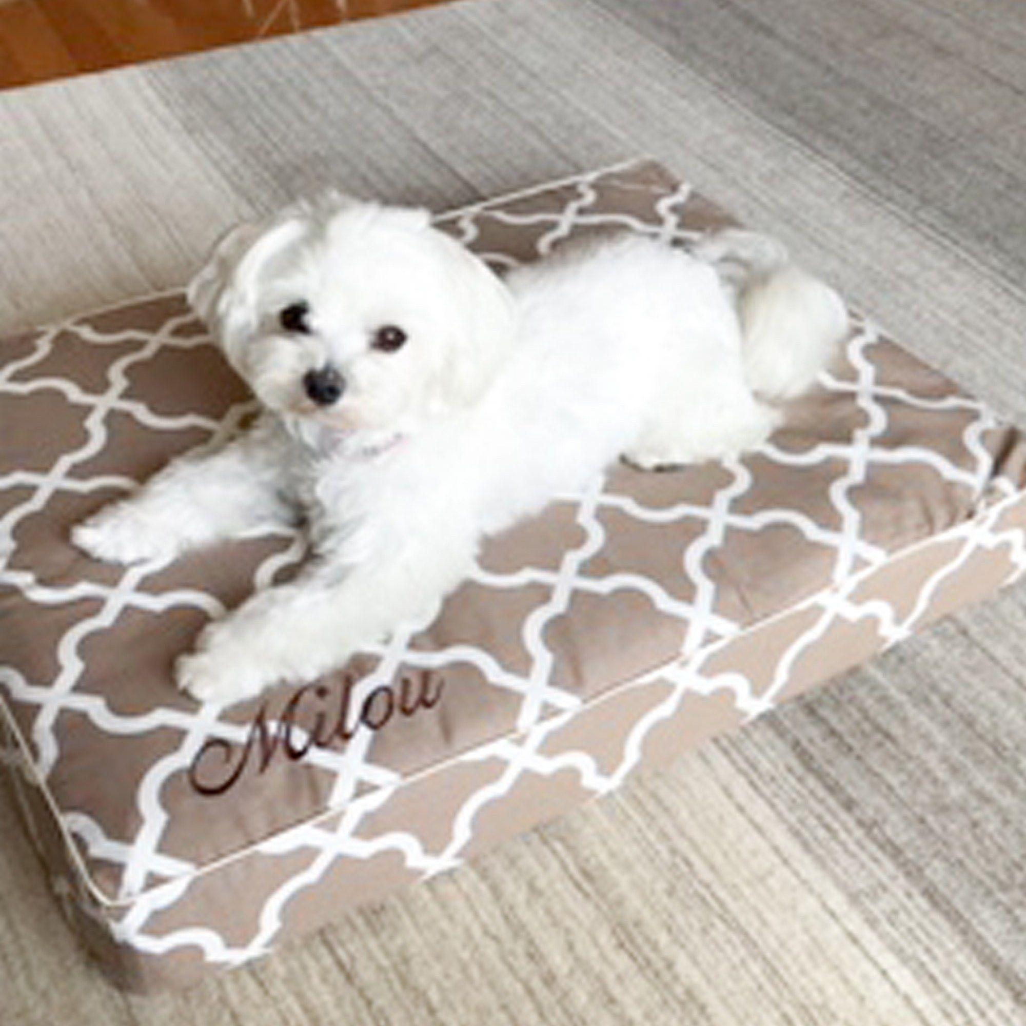 マルチーズのミルゥちゃん1歳です 犬のベッド アンベルソ公式ブログ 犬 マルチーズ 大型犬