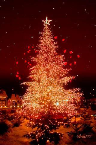 Whatsapp Christmas Videos Free Download : whatsapp, christmas, videos, download, Whatsapp, Status, Video, Download, Funny, Videos, FunnyTube.in, Christmas, Tree,, Memorial, Holiday,
