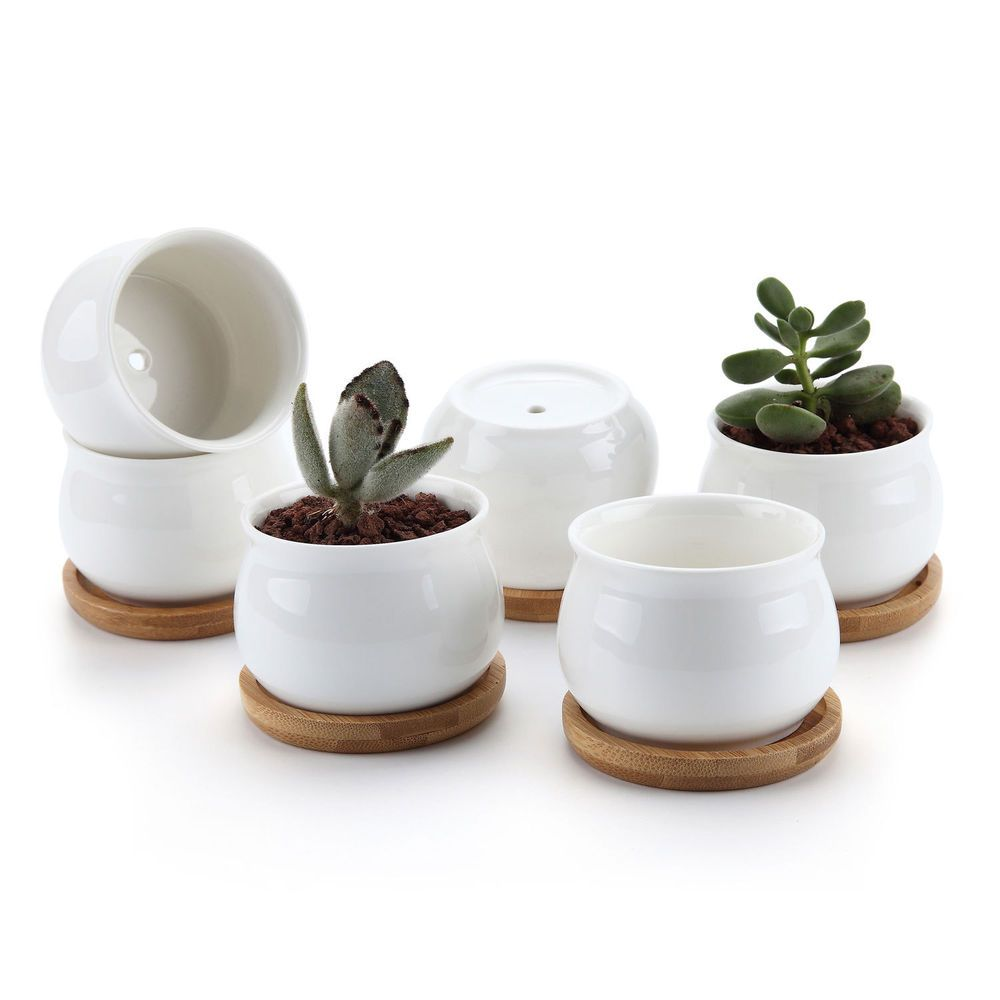 Small Ceramic Plant Pots Perfect For Holding Succulent Herbs And Catus Plants Indoor Use Ide Ceramic Succulent Cheap Plant Pots Ceramic Succulent Planter