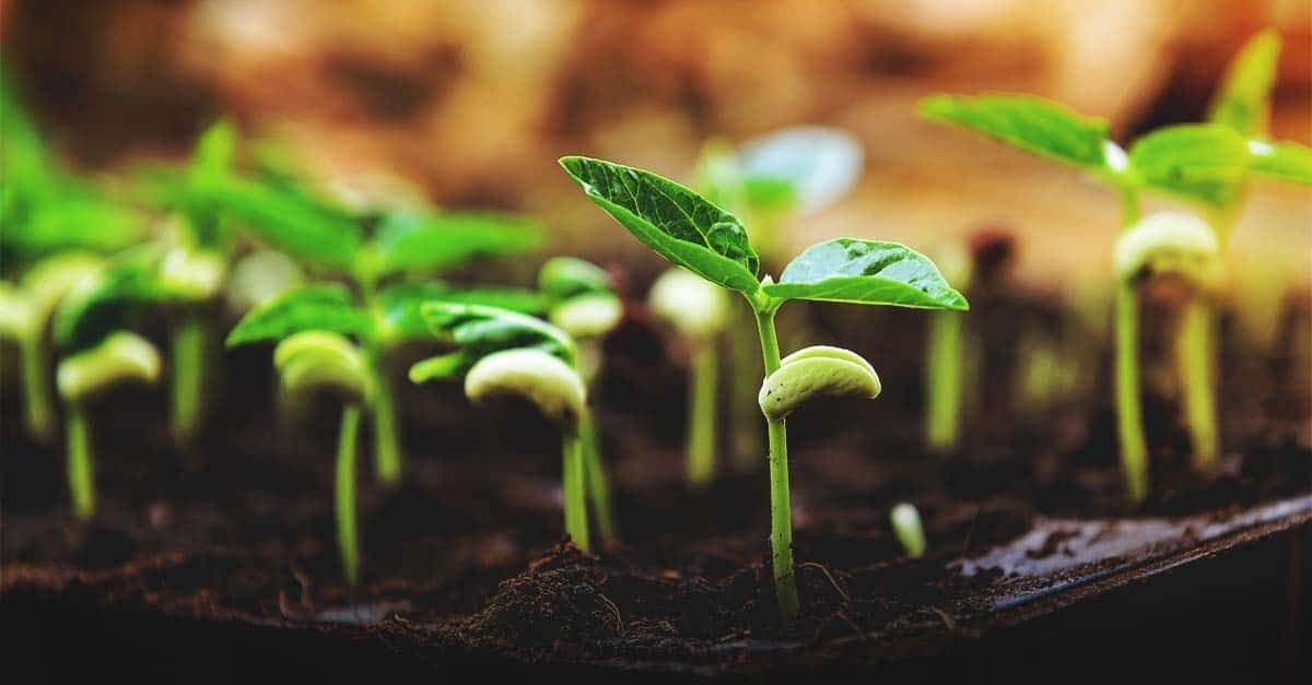The Right Seed Germination Temperature For Your Plants Seed