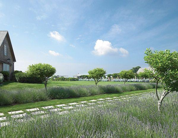 Image Result For Lavender Farm Landscape Design