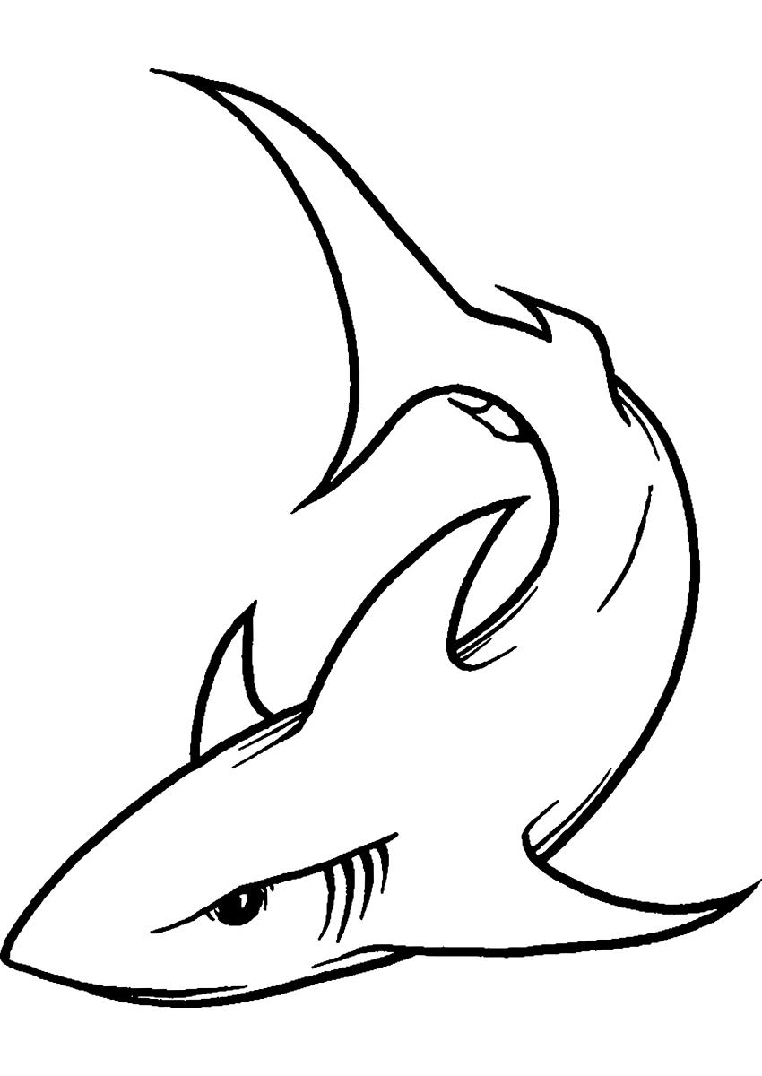 Dibujos De Tiburon Buscar Con Google Dibujo De Tiburon Dibujos Molones Dibujos