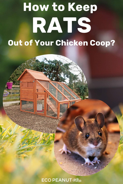 75864427efc0c185ef3c83f164dd69be - How To Get Rid Of Mice In Compost Bin