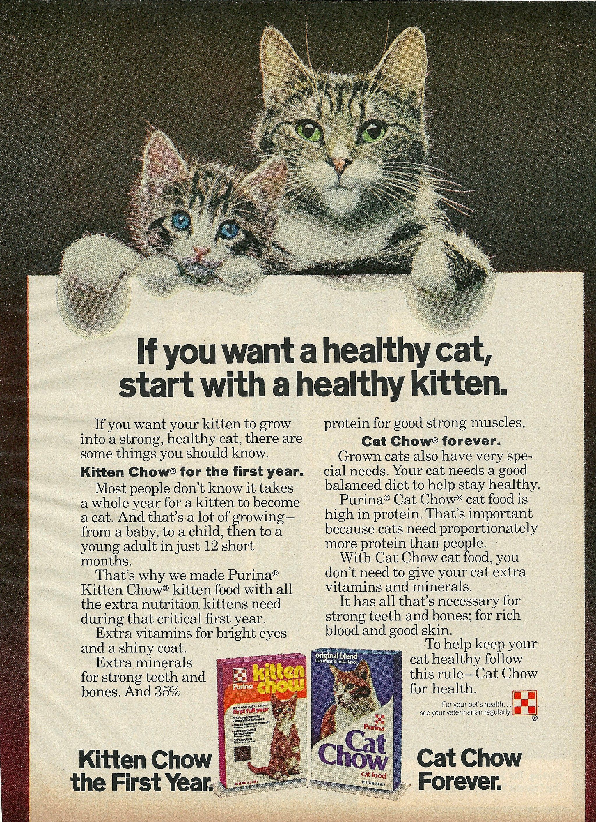 1977 Purina Cat Kitten Chow Food Print Ad Cats Cats And Kittens Kitten