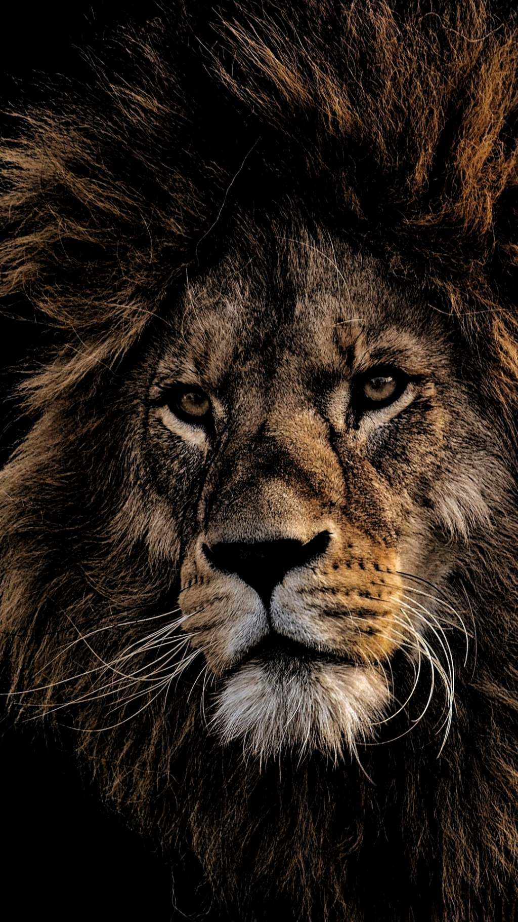 Best 5 Black Lion Wallpapers Background For Your Android Or Iphone Wallpapers Android Iphone Lion Wallpaper Lions Photos Bull Elephant
