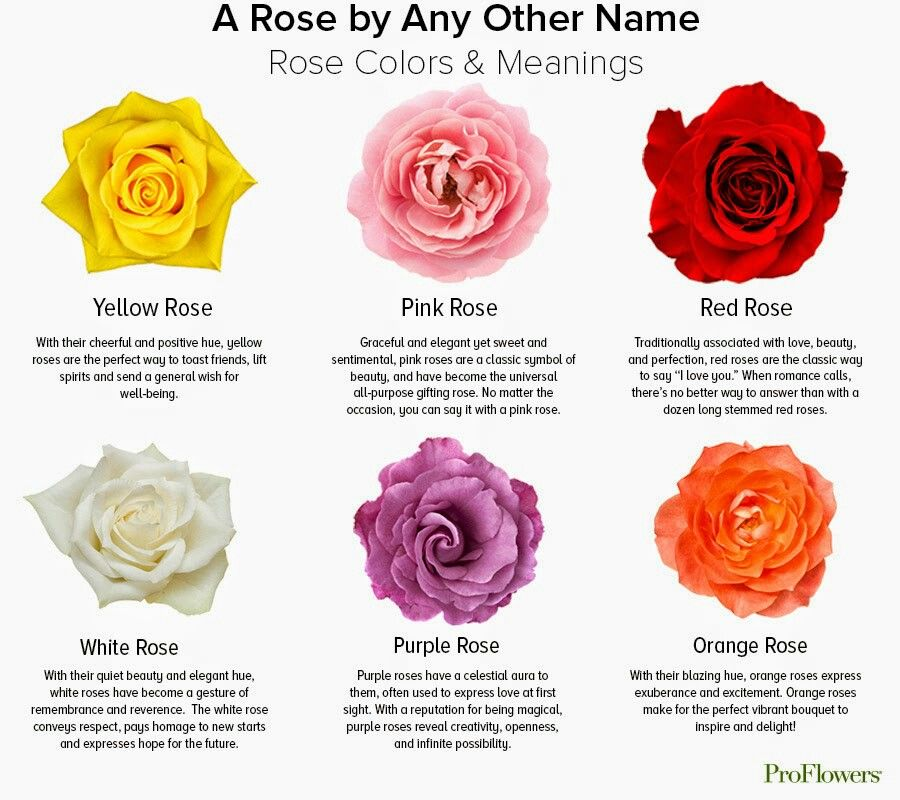 Rose Color Chart Meanings Flower Meanings Pinterest Flower