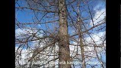 Kevään luonto- Dokumentti - YouTube