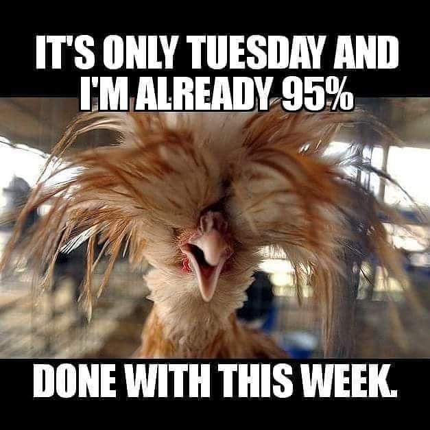 Tuesday Humor