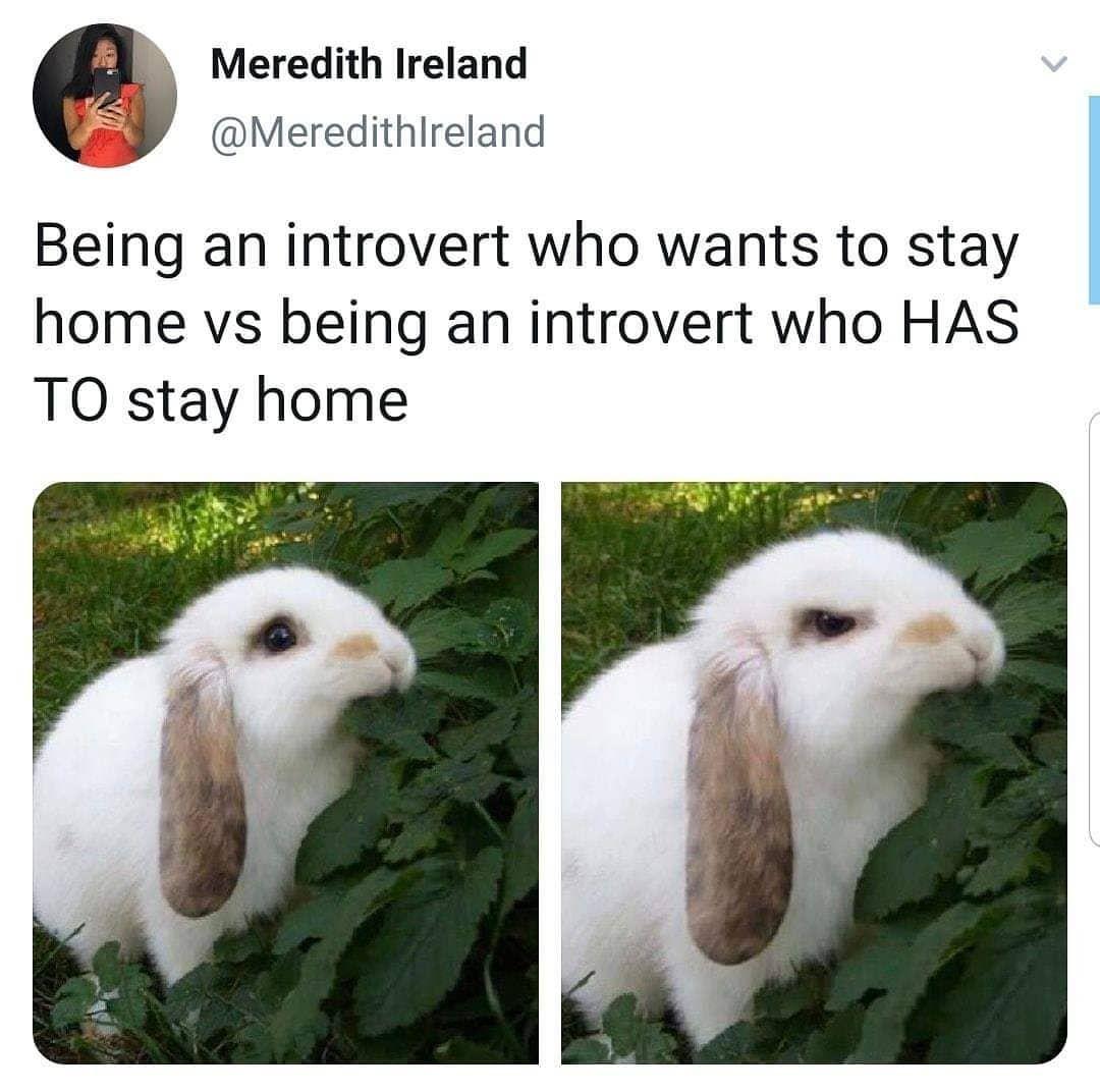 All Alone Meme Narcos