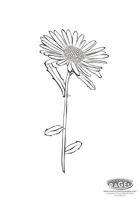 Aster Coloring Page Aster Flower Flower Drawing Flower Line Drawings