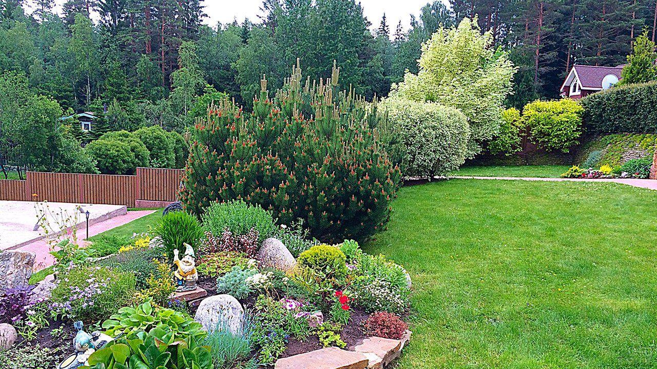 Оформление сада (47 фото) в 2020 г | Кустарники, Сад ...