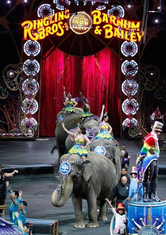 osCurve News: Elephants performed for the last time