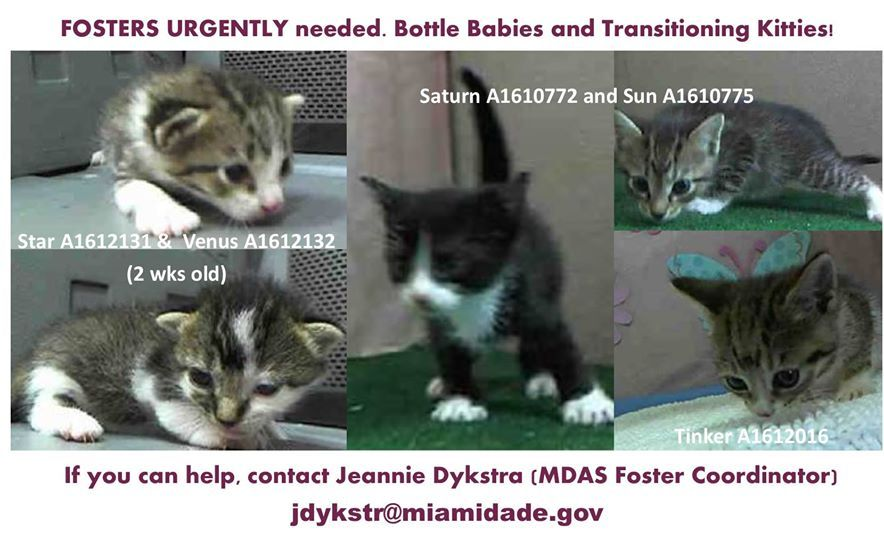 PLEASE SHARE: South Florida - These babies are at the shelter now WAITING FOR SOMEONE TO SAVE THEM! Can you help?  Miami-Dade Animal Services, Medley, FL