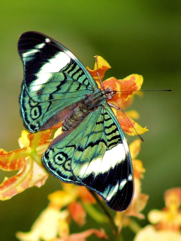 Butterfly! And with gallbladder cancer awareness color!!                                                                                                                                                     More