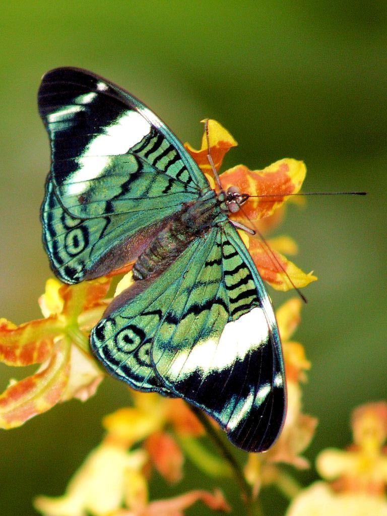 Butterfly Beautiful Butterflies Butterfly Wings Butterfly Pictures