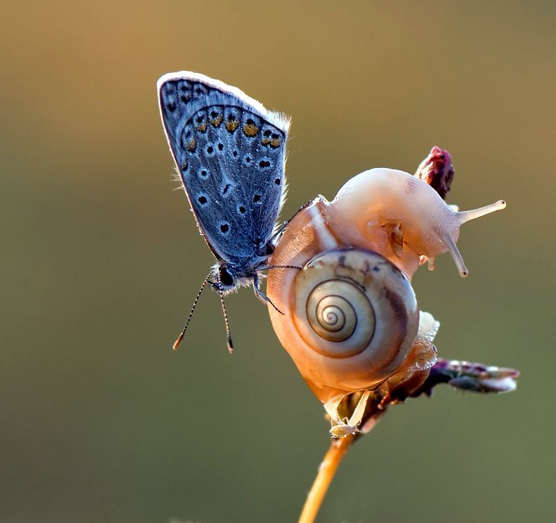 Snail and friend