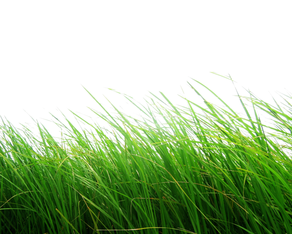 Pin By Mayank Chavda On Resources Grass Photoshop