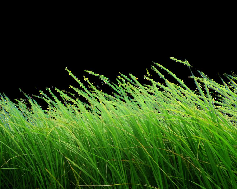 Png Grass Grass Photoshop Png Images Grass