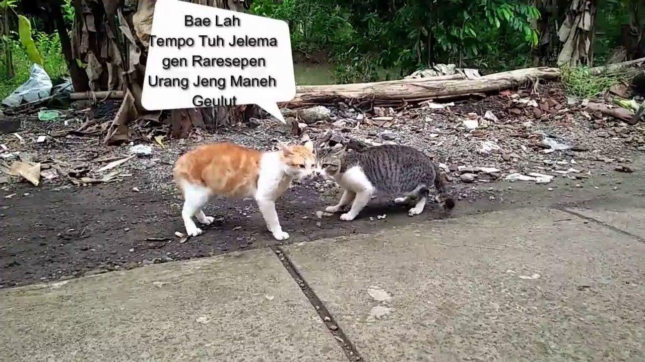 Unduh 95+ Gambar Kucing Lucu Bahasa Sunda Terbaik Gratis