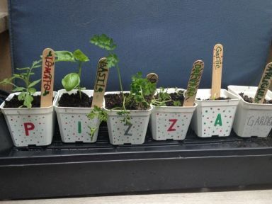 Making Pizza Herb Gardens - Close To Home @Smiley360 #gardening