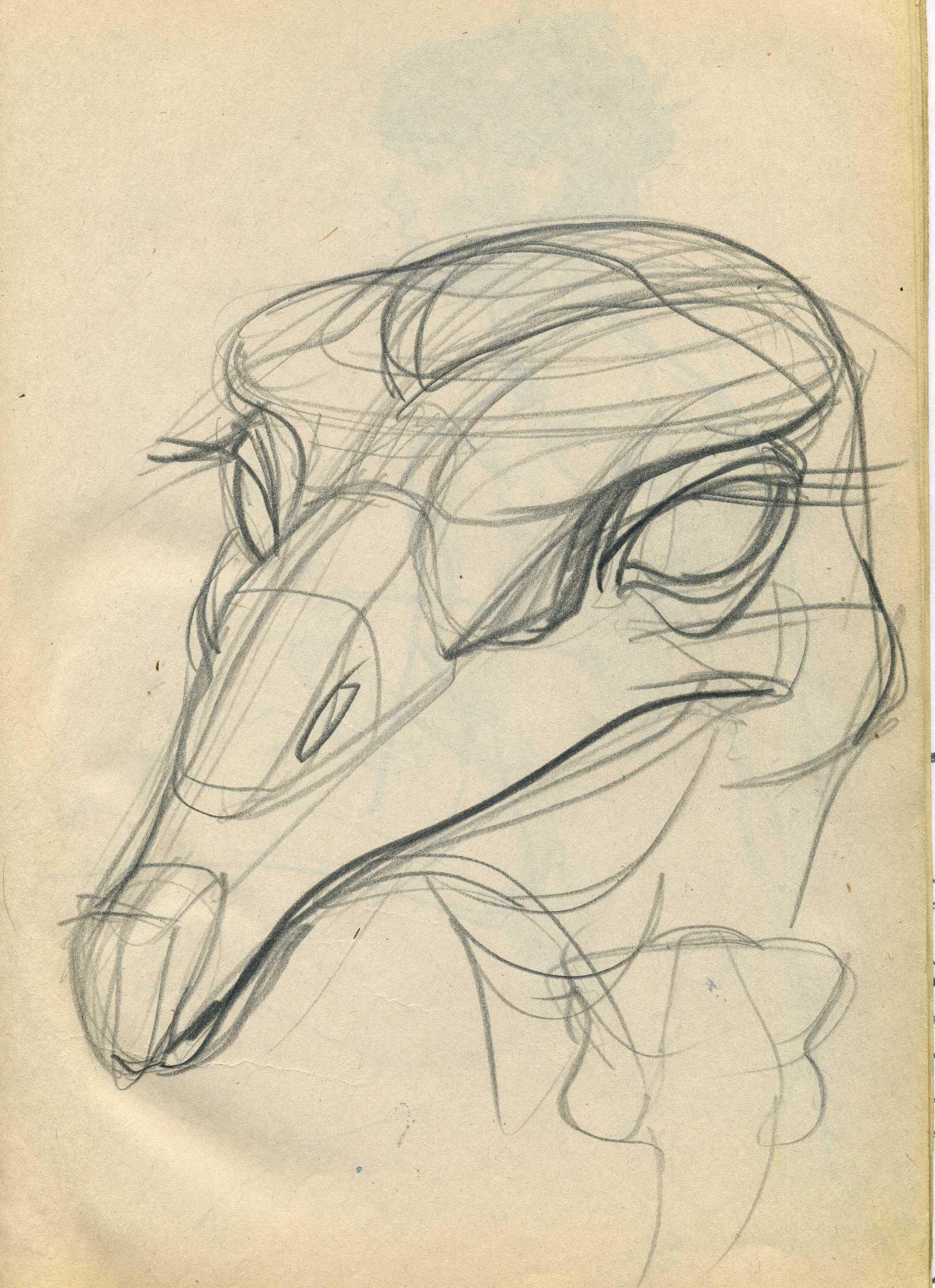 Мартынюк В.Конструктивный рисунок страуса. | Анималистика ...