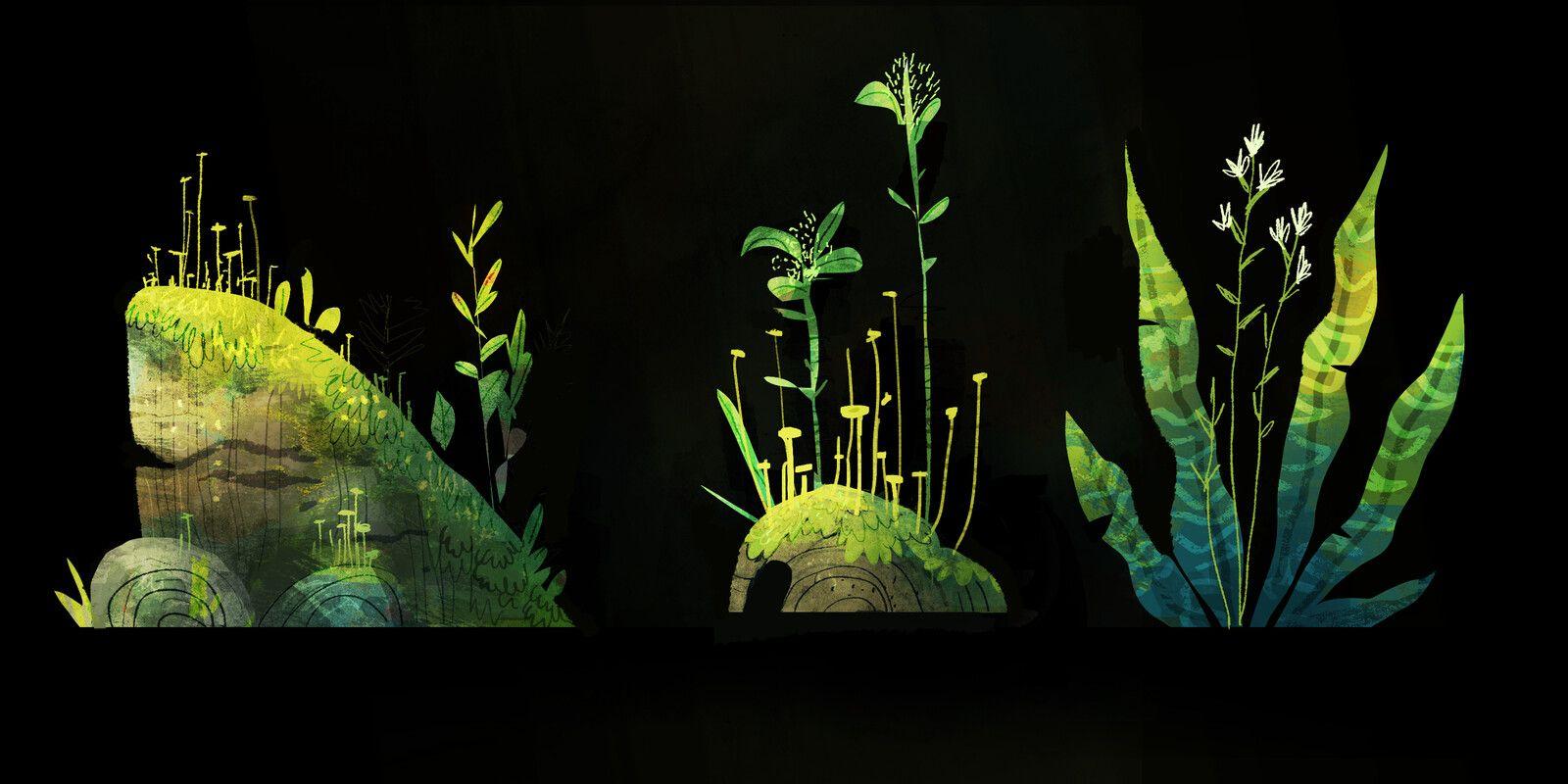 Plant Explorations, Nik Henderson