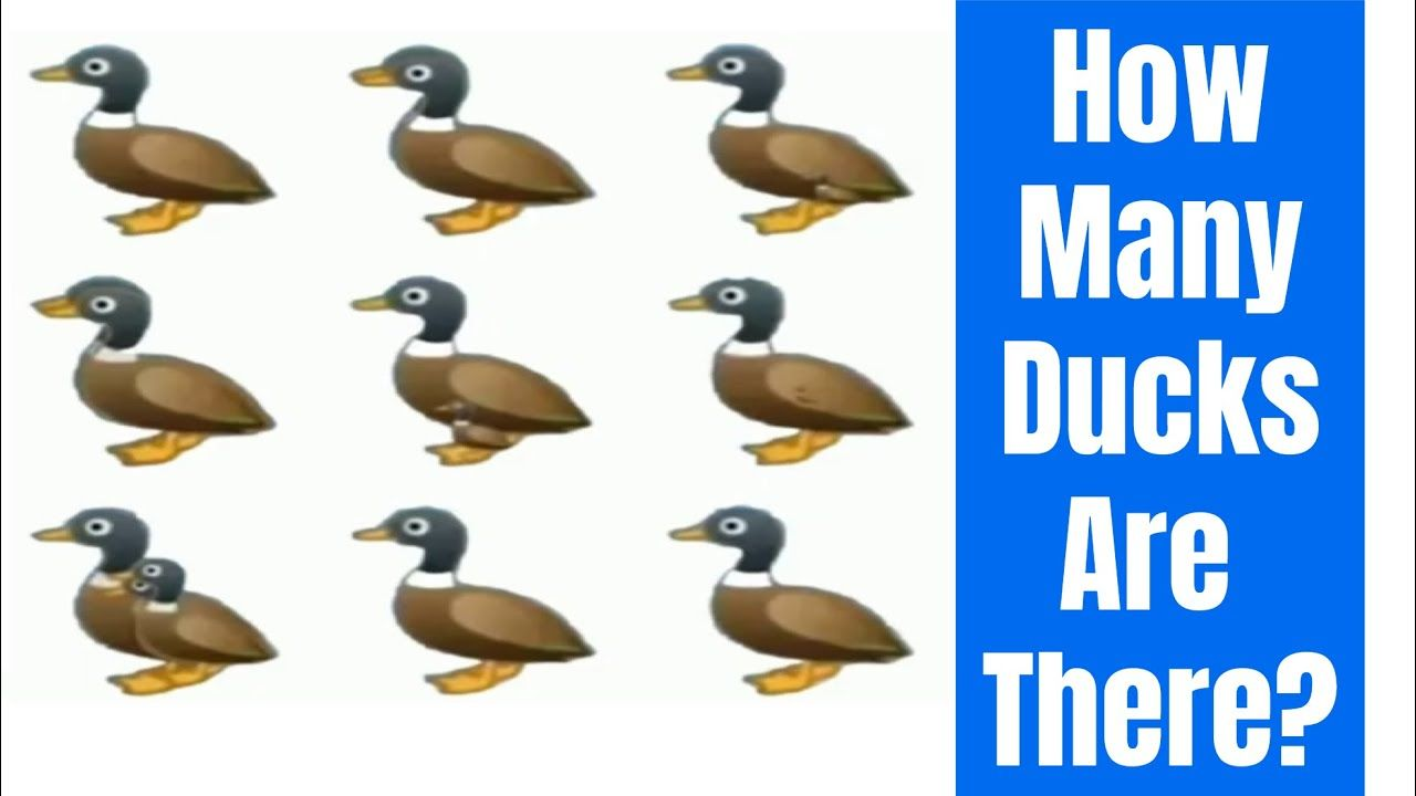 How Many Ducks Are There In The Picture Viral Puzzle Duck Counting Puzzles How Many
