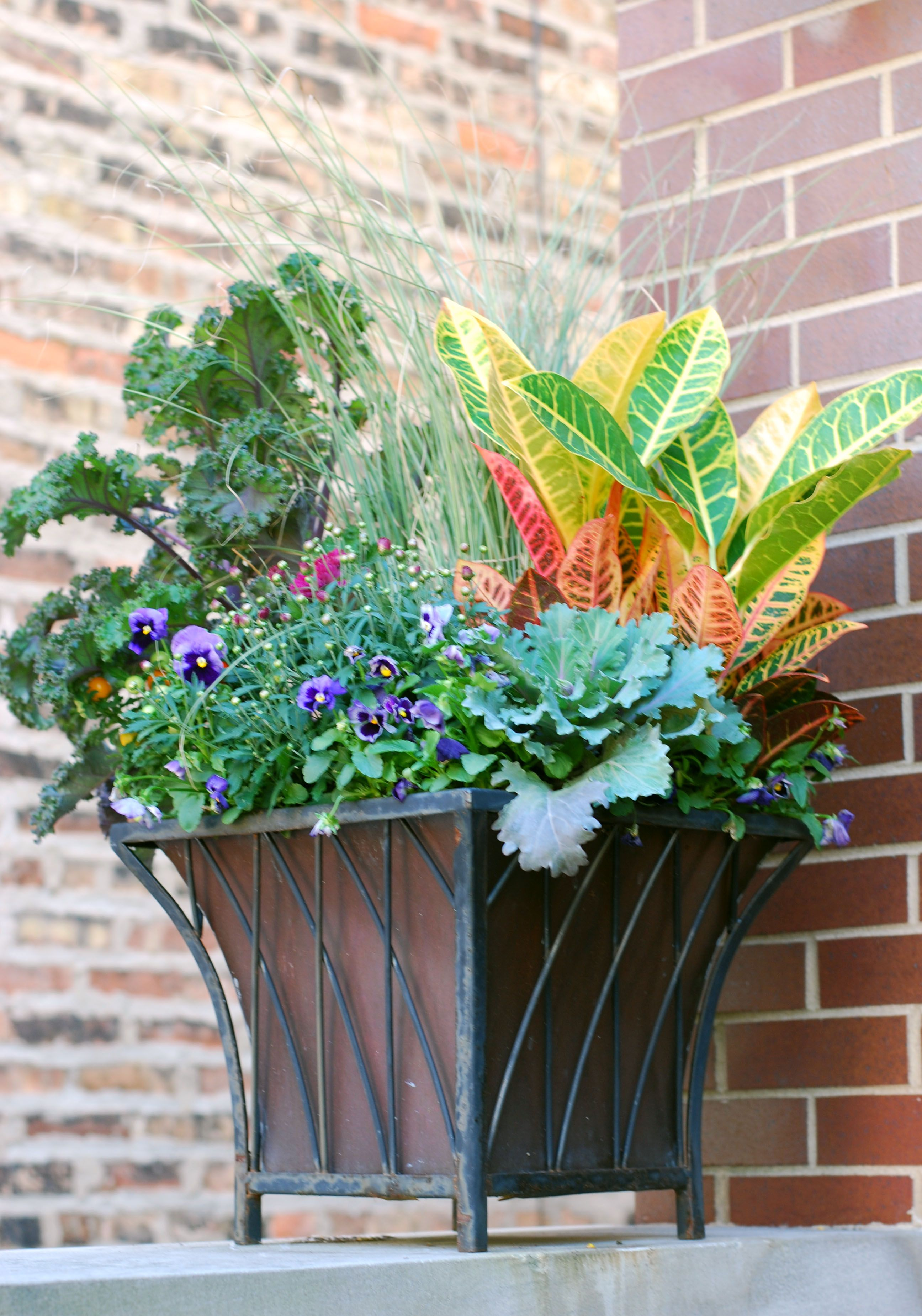 Fall Annuals Planter Container Front Entrance Croton Kale