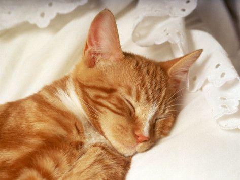 precious...peaceful.....love orange marmalade kitties....