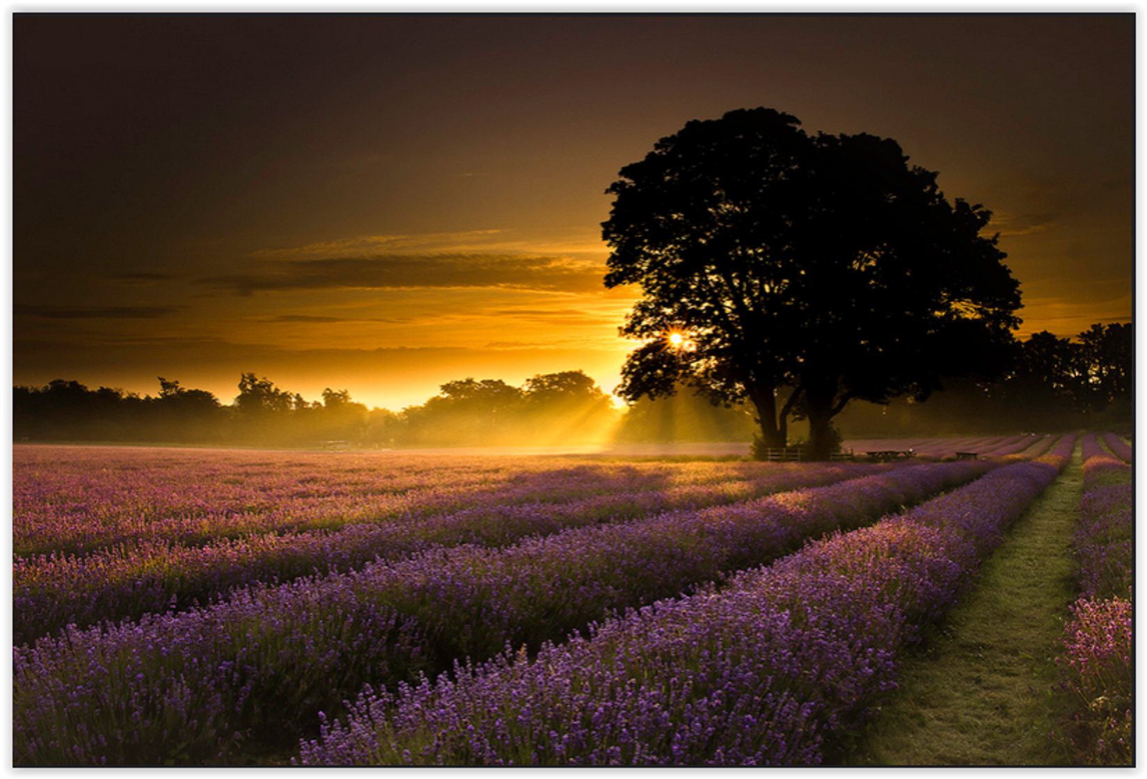 Mayfair Lavender First Light - Taken after spending quite sometime trying to locate a lavender field with something a little different. First time to the location and so lucky to have the early morning mist and perfect morning sky. Looking forward to another visit once the seasons change.