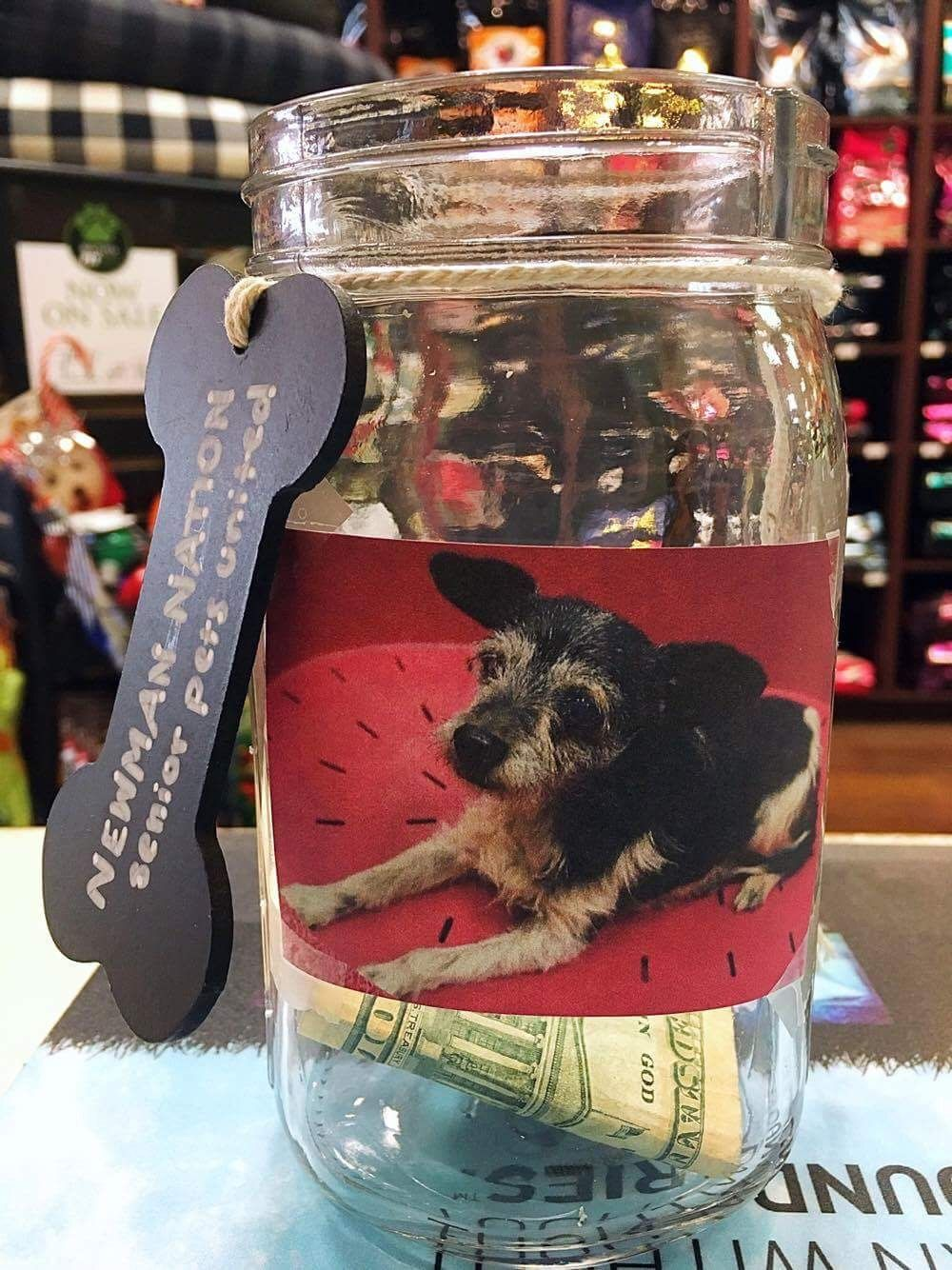 Donation jar at local pet food store dog charities