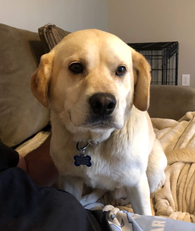Adopt Thaddeus On Labrador Retriever Pet Search Pet Care Tips