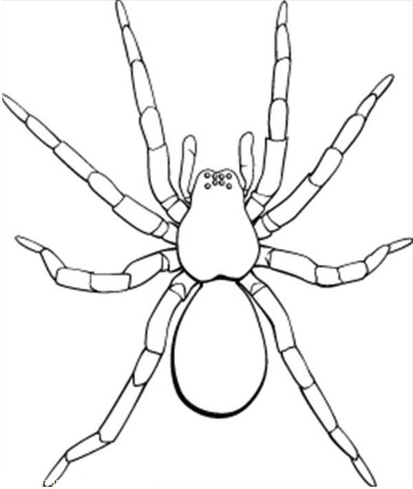 Picture Of Tarantula Coloring Page Picture Of Tarantula Coloring