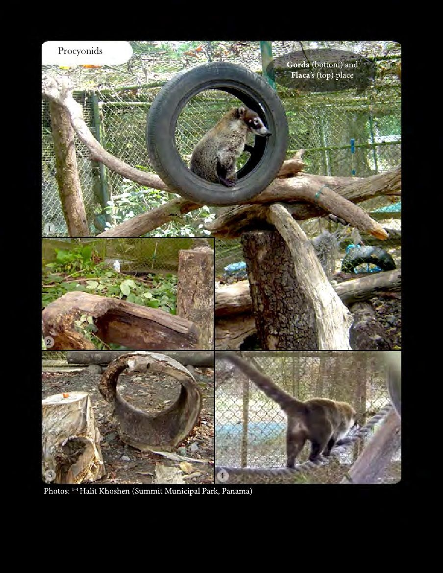 Environmental Enrichment And Well Being Of Mammals In Captivity Enrichment Mammals Zoo Animals