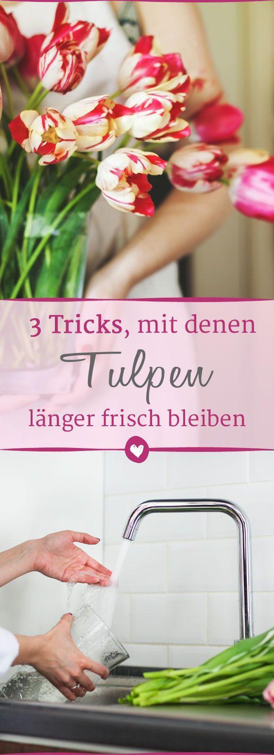 so bleibt der tulpenstrau l nger frisch pflanzen garten pinterest blumen tulpen und. Black Bedroom Furniture Sets. Home Design Ideas
