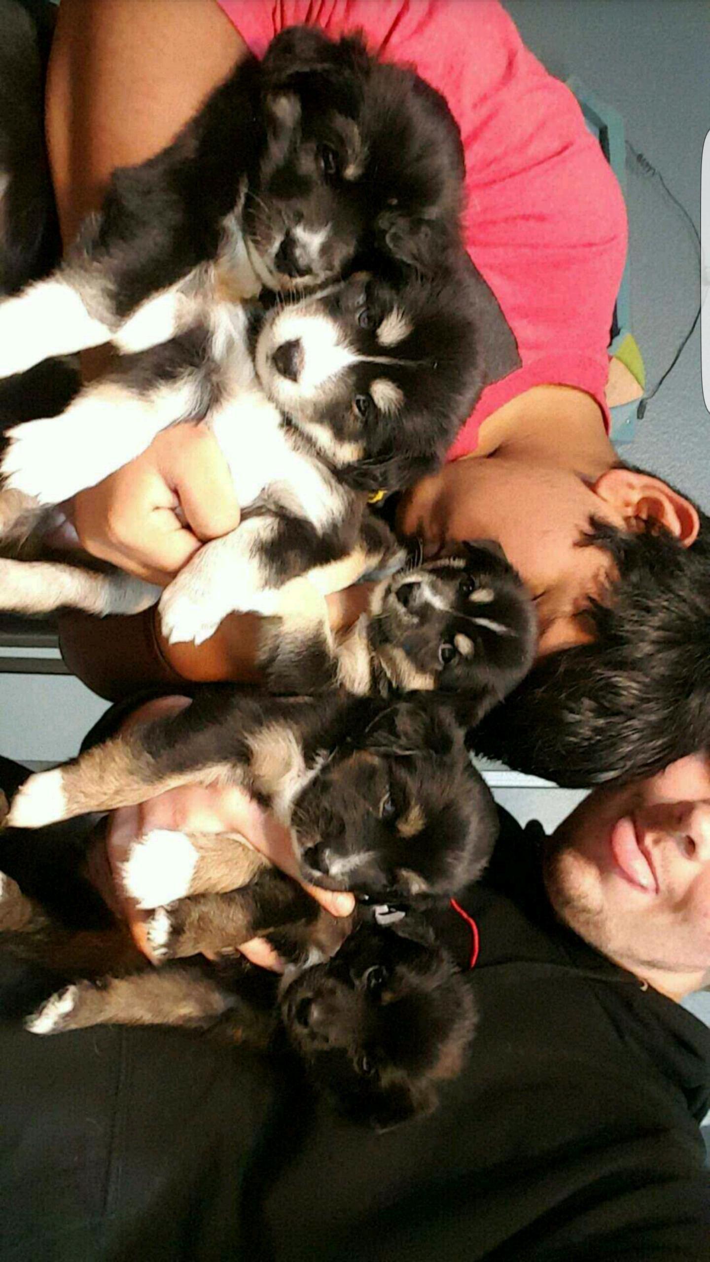 5 little pups