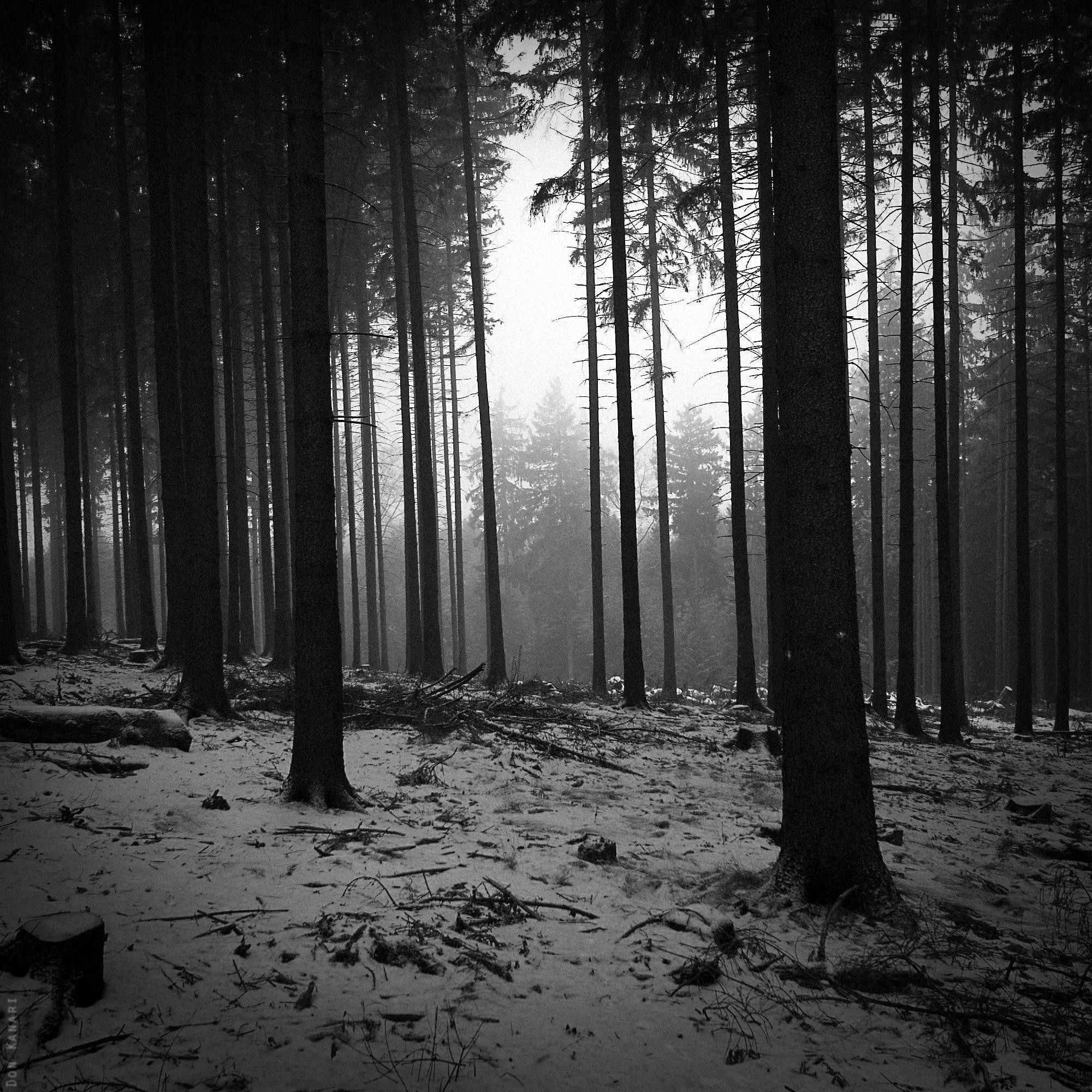 Black And White Landscapes Trees Forest Monochrome 2000x2000