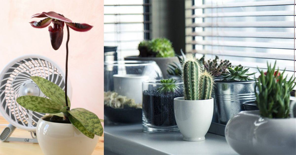 The Most Common Cause Of Untimely Houseplants Is Poor Air Circulation Learn How To Improve It With These Tips In This Article