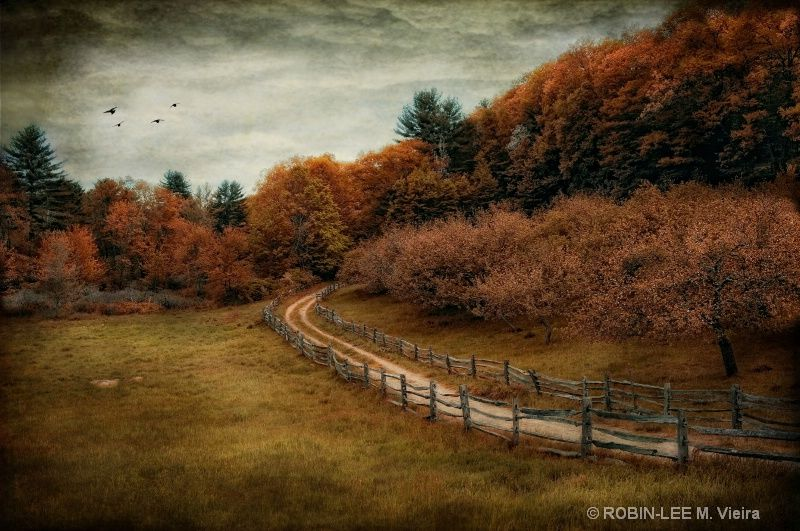 The road less traveled. Don't know where this is, but it looks like a great place for a walk!